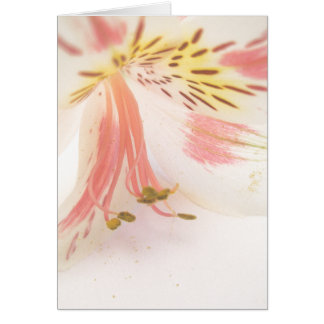 Lis jaune et blanc rose carte de vœux