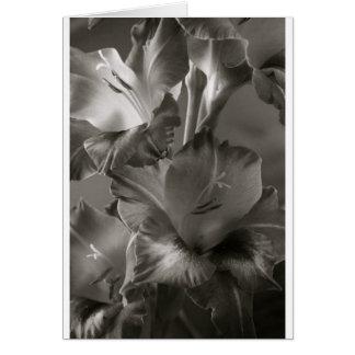 Lis noir et blanc carte de vœux