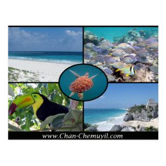 Locations de vacances de Tulum - carte postale de