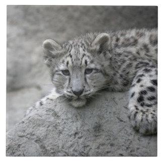 L'petit animal de léopard de neige de bébé de 4 mo grand carreau carré
