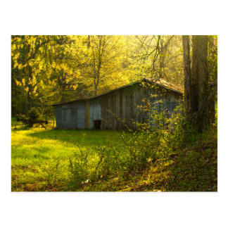 Lumière rurale de matin de ressort du Tennessee Carte Postale