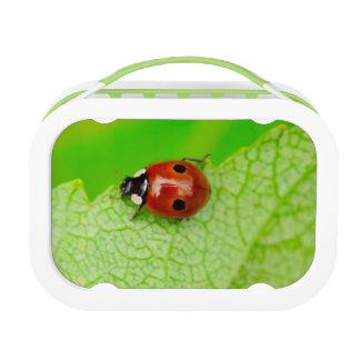 Lunch Box Ladybird marchant à travers une feuille