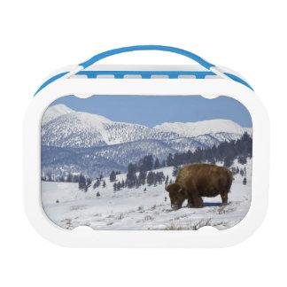 Lunch Box Les Etats-Unis, WY, Yellowstone NP, bison de bison