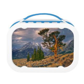 Lunch Box Les Etats-Unis, Wyoming, Teton grand NP. Le lever