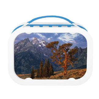 Lunch Box Les Etats-Unis, Wyoming, Teton grand NP. Un cèdre