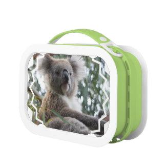 Lunch Box Ours de koala