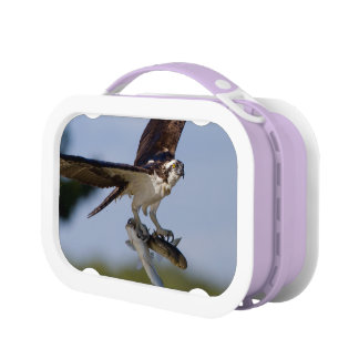 Lunch Box Représentation