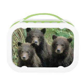 Lunch Box Trois ours gris CUB ou Coys (CUB de
