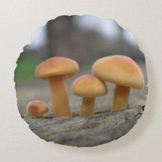 Macro coussin de champignons minuscules