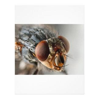 Macro photo d'une mouche prospectus