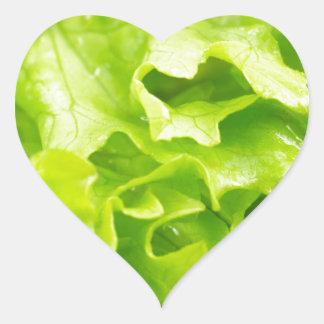 Macro vue du feuille de laitue dans une salade sticker cœur