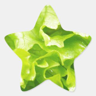 Macro vue du feuille de laitue dans une salade sticker étoile