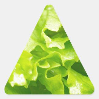 Macro vue du feuille de laitue dans une salade sticker triangulaire