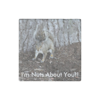 Magnet En Pierre Salut photographie de def d'un écureuil, bons