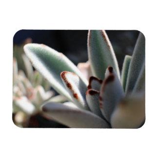 Magnet Flexible Aimant flexible de photo de plante succulent