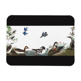 Magnet Flexible Collage d'Audubon d'aimant de faune d'oiseaux