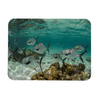 Magnet Flexible École des poissons de laiss