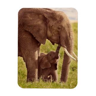 Magnet Flexible Éléphant et bébé des images | de Getty