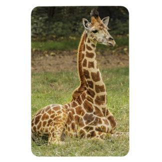 Magnet Flexible Faune de girafe