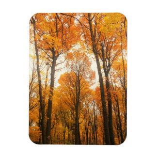 Magnet Flexible Forêt orange d'automne