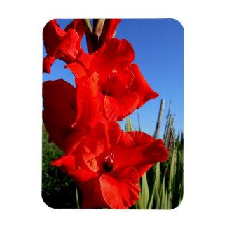 Magnet Flexible Glaïeul rouge et le ciel bleu