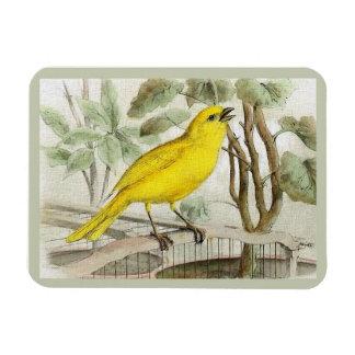 Magnet Flexible Illustration vintage jaune canari