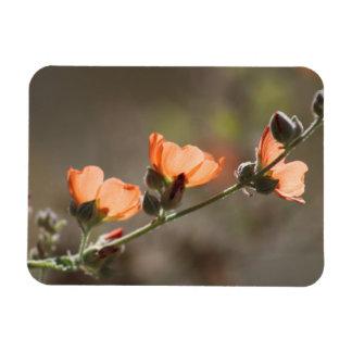 Magnet Flexible La mauve d'abricot fleurit l'aimant flexible de
