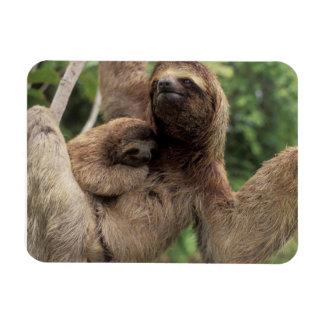 Magnet Flexible Maman Sloth et aimant de bébé