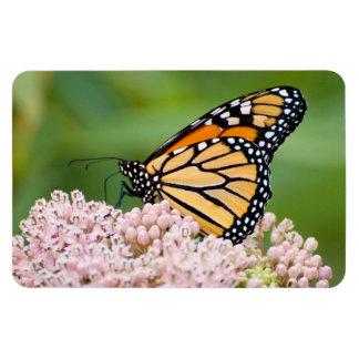 Magnet Flexible Monarque sur l'aimant de photo de fleur de