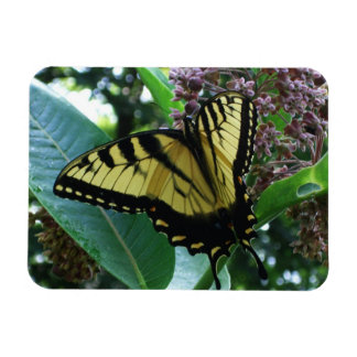 Magnet Flexible Papillon de machaon I sur le Milkweed chez