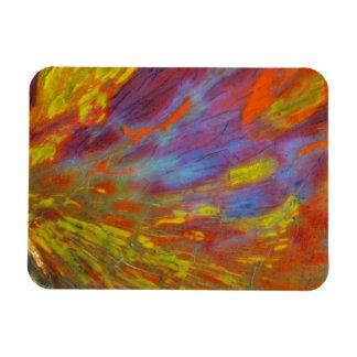 Magnet Flexible Plan rapproché coloré en bois Petrified