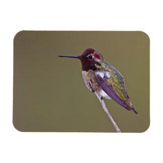 Magnet Flexible Repos de colibri