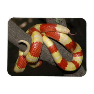 Magnet Flexible Serpent de lait