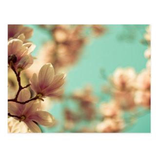Magnolia molle de foyer cartes postales