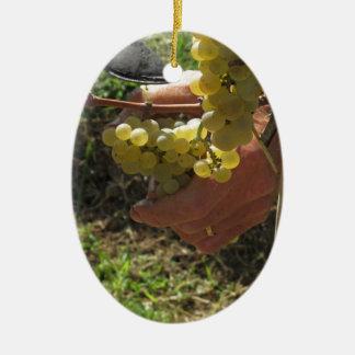 Main coupant les raisins blancs, temps de récolte ornement ovale en céramique