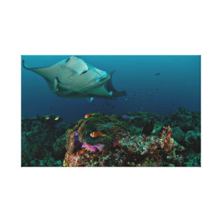 Mantarays over anemoon - Canvas