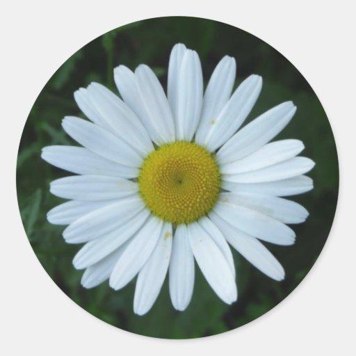 Marguerite blanche autocollants