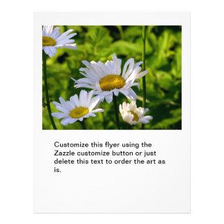 Marguerites heureuses de fleurs dans la photo d'ar prospectus