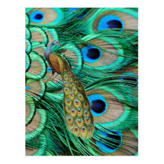 mariage turquoise de paon de turquoise vintage carte postale
