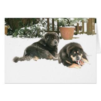 Mastiff tibétain Caspar et Jampo Carte