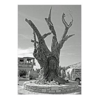 Matala. Un arbre dans la mémoire des hippies. Impression Photo