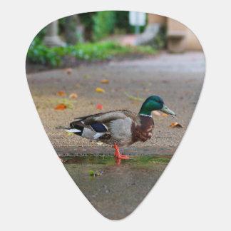 Médiators Canard masculin de Mallard le jour pluvieux