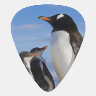 Médiators L'Antarctique, crique de Neko (port). Pingouin 2