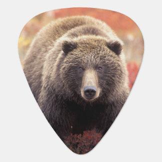 Médiators Les Etats-Unis, Alaska, Denali NP, ours gris