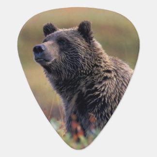 Médiators Na, Etats-Unis, Alaska, Denali NP, ours gris