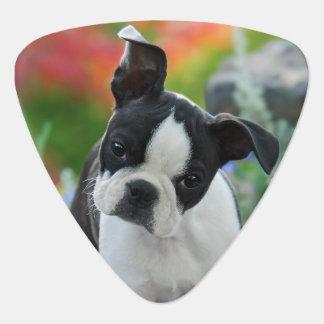 Médiators Portrait mignon de chiot de chien de Boston