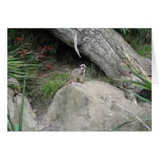 Meerkat Carte