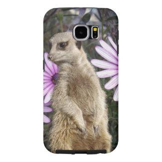 Meerkat et marguerites pourpres,