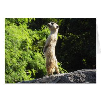 Meerkat- sur la montre carte