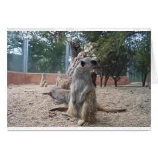 Meerkats merveilleux carte